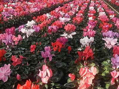 kwiaty_doniczkowe.jpg