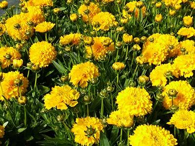 kwiaty_doniczkowe2.jpg