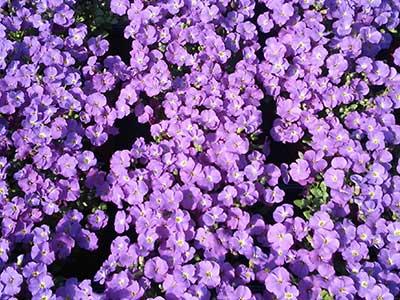 kwiaty_doniczkowe3.jpg